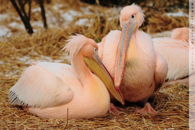 Beak to Beak by amaliabastos