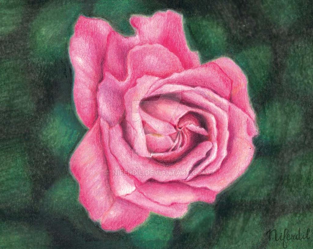 Rose by niferdil