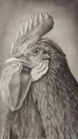 Chicken portrait  by niferdil