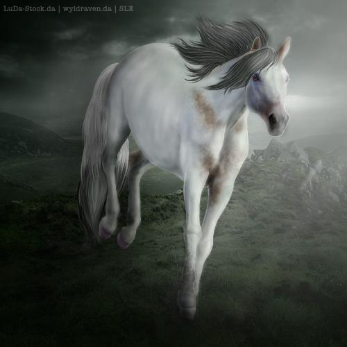 Oxygen - Horse Avatar