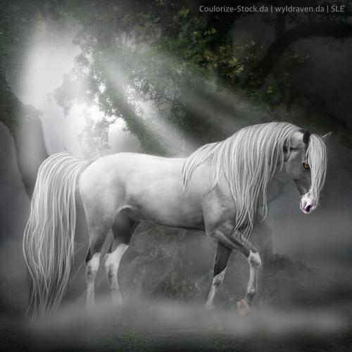 Alanti - Horse Avatar