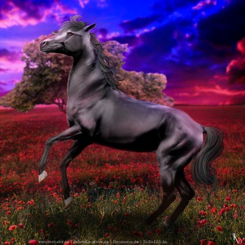 Cadeau - Horse Avatar