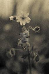 Flower-man