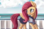 Sailor Shy