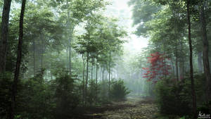 Foggy woods by AronKamo