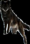 Black Timberwolf Precut