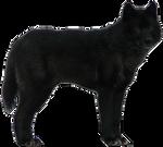 Wolf Precut