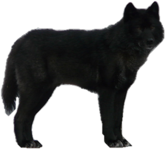 ... Wolf By ITSDura On DeviantArt together with Transparent Wolf Clip Art