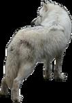 White Wolf Precut