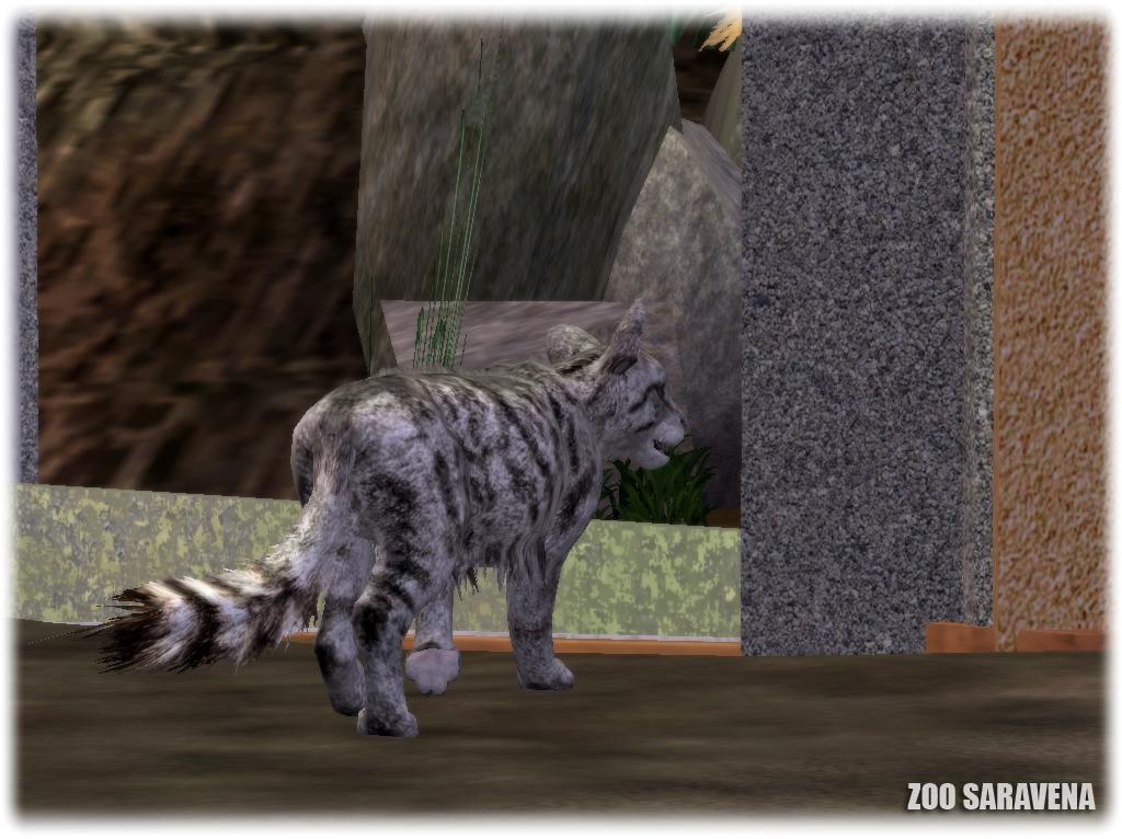 Zoo Saravena: Shy by GrandeChartreuse
