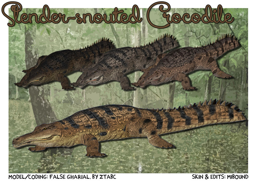 Topics tagged under crocodile on User - Made Creations Zt2__slender_snouted_crocodile_download_screen_by_grandechartreuse-d6cxdlr