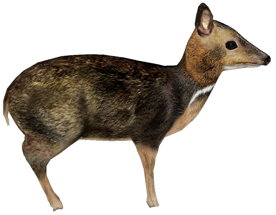 Philippine Mouse-Deer (Balabac Mouse-Deer) WIP