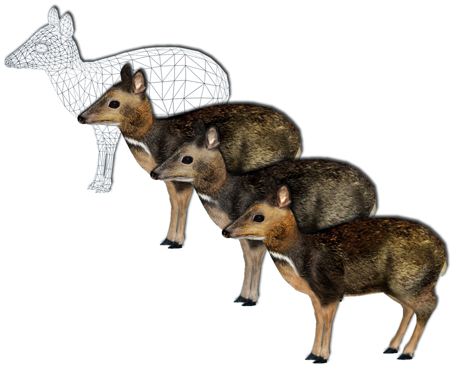 ZT2: Philippine Mouse-Deer and Variants by GrandeChartreuse on ...
