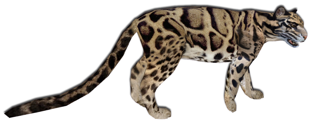 Clouded Leopard Main Skin by GrandeChartreuse