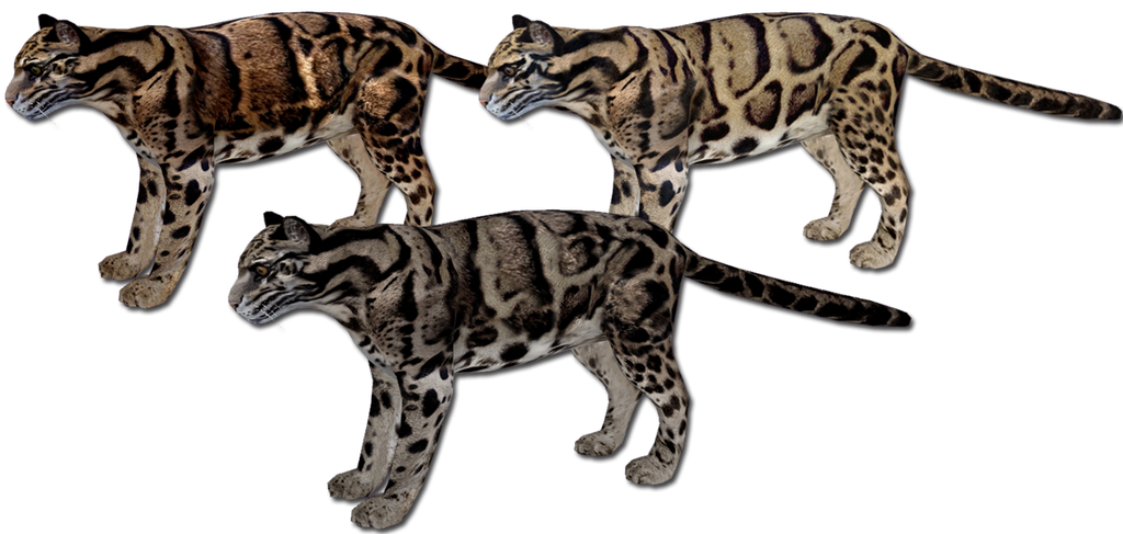 Clouded Leopard Variants by GrandeChartreuse