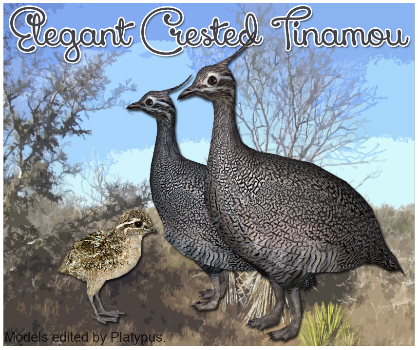 Elegant Crested Tinamou Download Screen by GrandeChartreuse