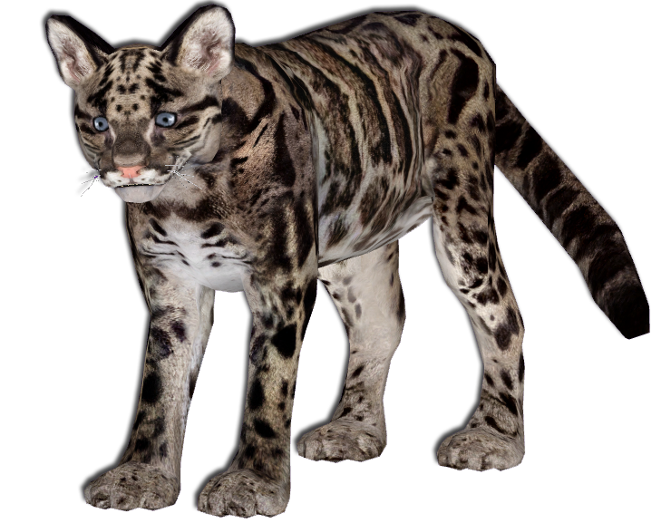 Baby Clouded Leopard Preview by GrandeChartreuse