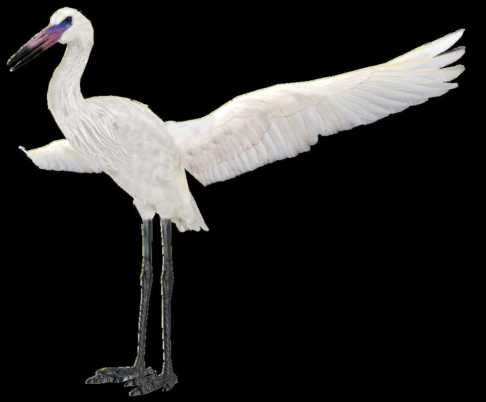 Reddish Egret White Morph Variant by GrandeChartreuse