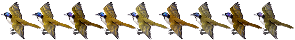 Blue-faced Honeyeater Variants by GrandeChartreuse