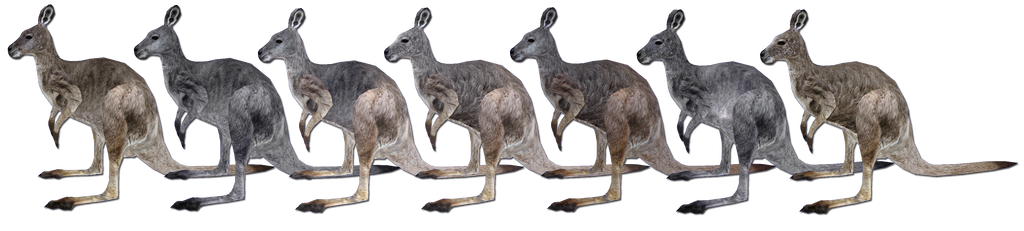Eastern Wallaroo Main Female Skin and Variants by GrandeChartreuse