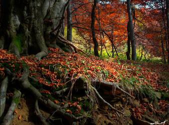 autumn VIII by JoannaGebka