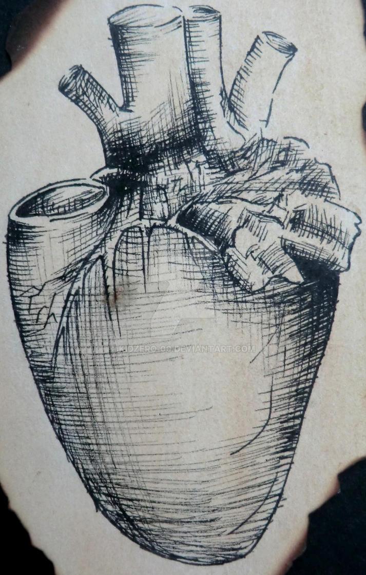 Da Vinci Anatomy- Heart by KidZero-00 on DeviantArt