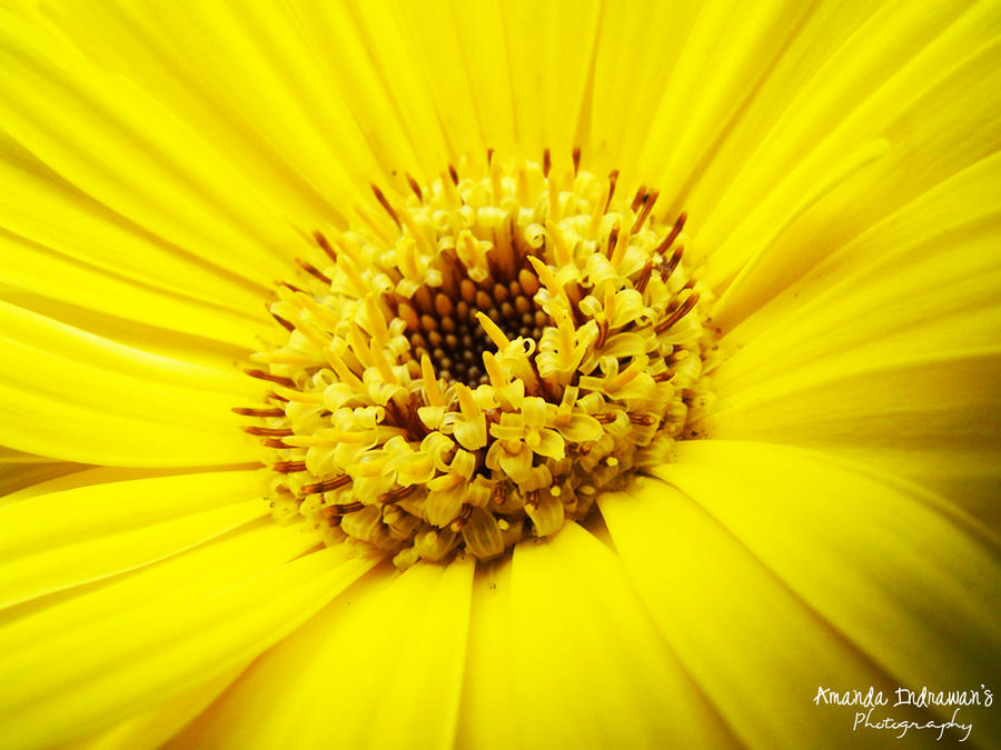 A bright yellow flower by babypandafang on deviantart a bright yellow flower by babypandafang mightylinksfo