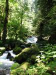 Lush Creek