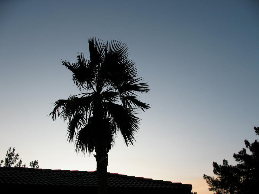 Palm Trees Silhouette Palm Tree Silhouette by