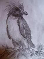 Rock penguin by Teratophoneus