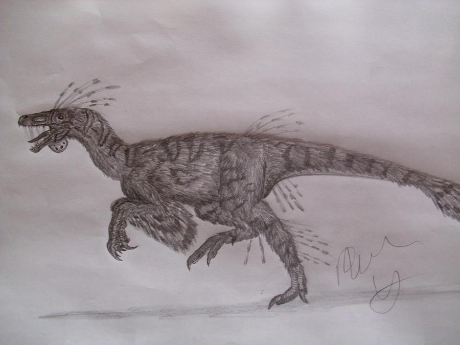 Elopteryx