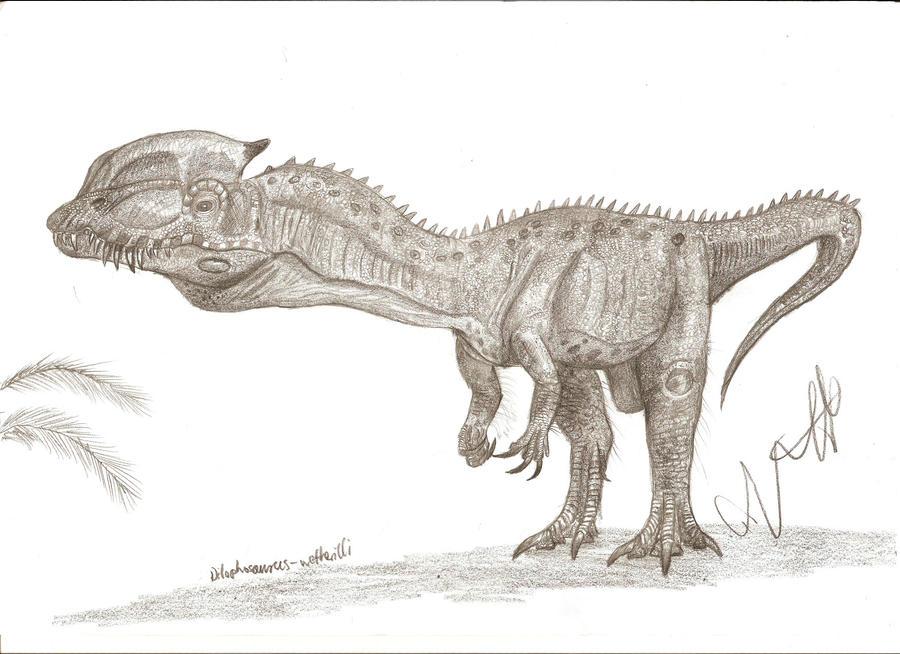 Dilophosaurus Drawing Dilophosaurus wetherilli byDilophosaurus Drawing