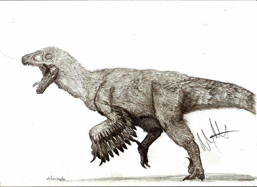 Atrociraptor marshalli