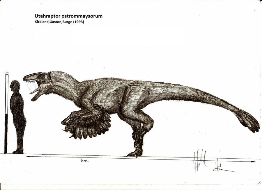 Utahraptor ostrommaysorum by Teratophoneus