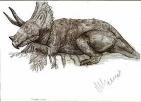 Triceratops horridus by Teratophoneus