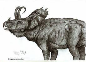 Dysganus encaustus by Teratophoneus