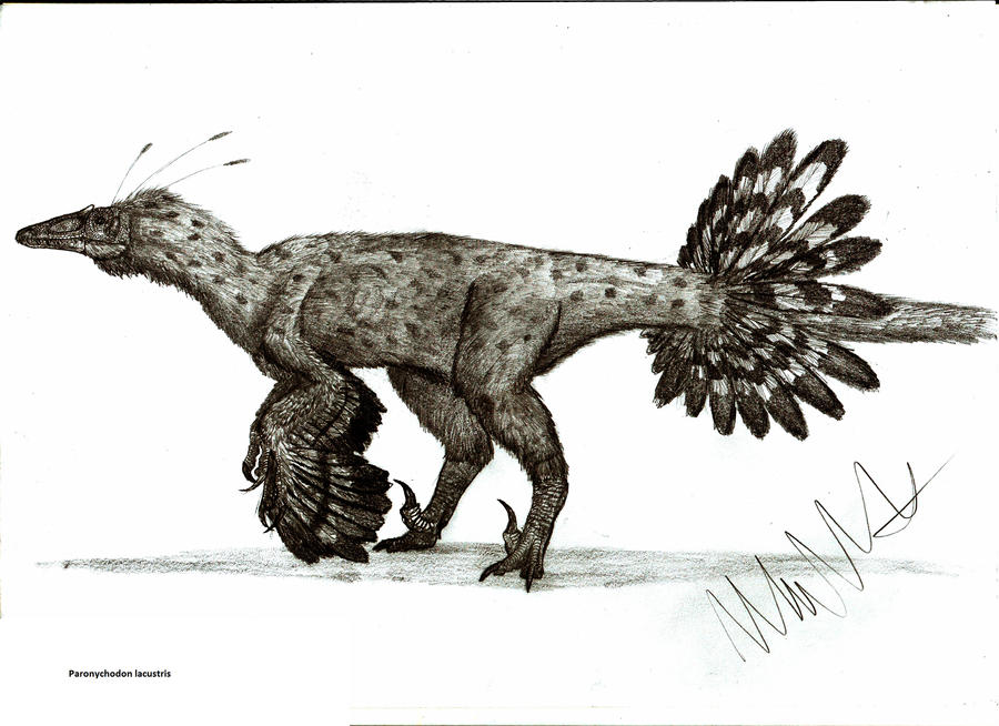 Paronychodon lacustris by Teratophoneus