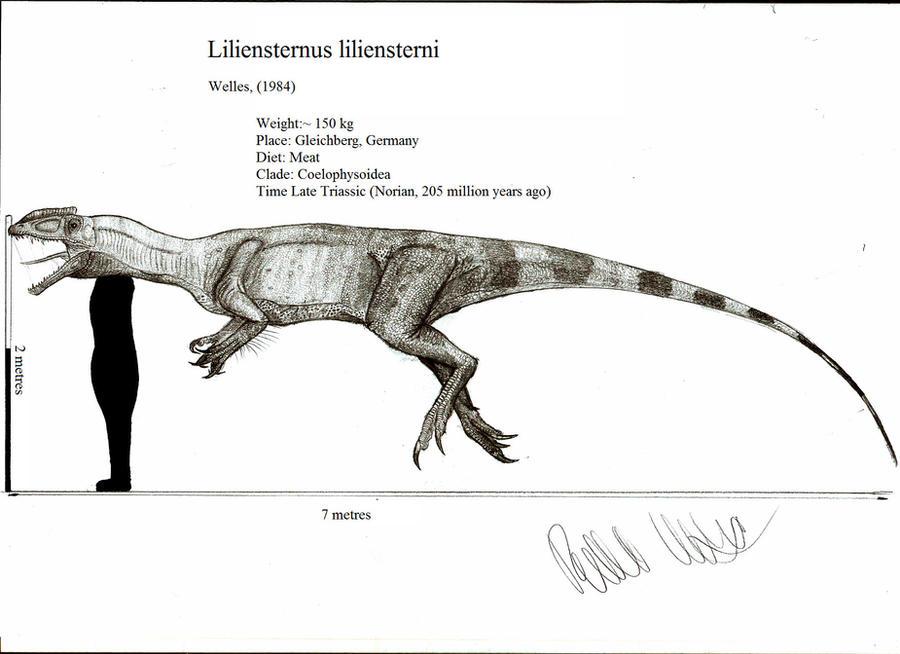 Liliensternus liliensterni by Teratophoneus