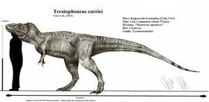 Teratophoneus curriei