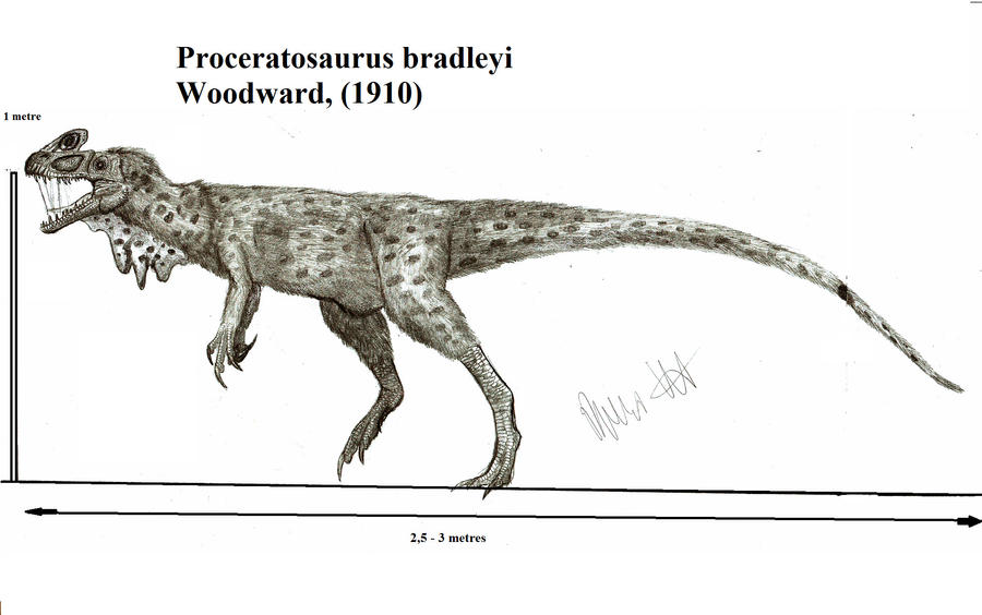 proceratosaurus_bradleyi_by_teratophoneus-d54jfz0.jpg