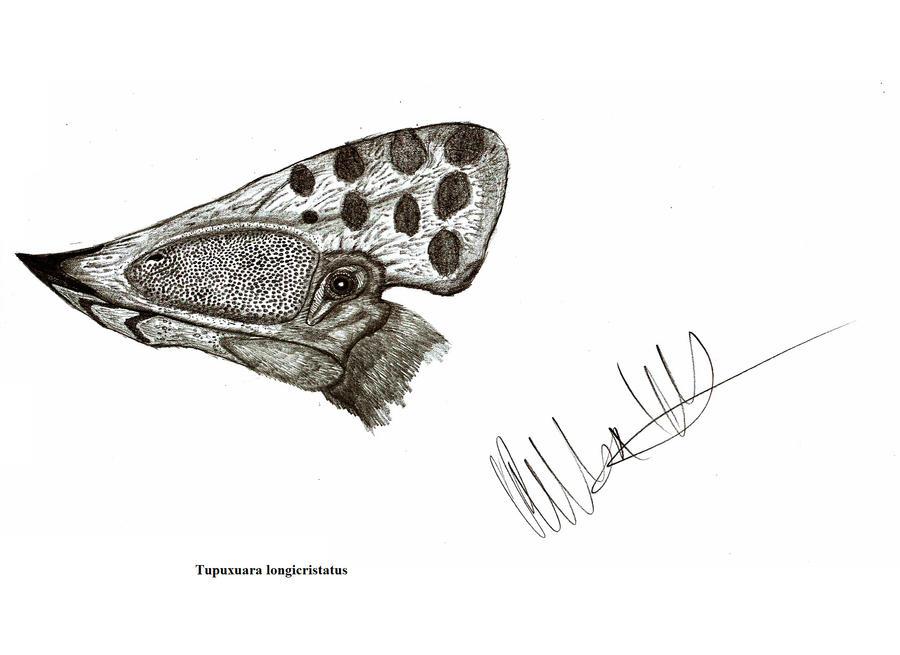 Tupuxuara longicristatus by Teratophoneus