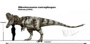 Albertosaurus sarcophagus by Teratophoneus