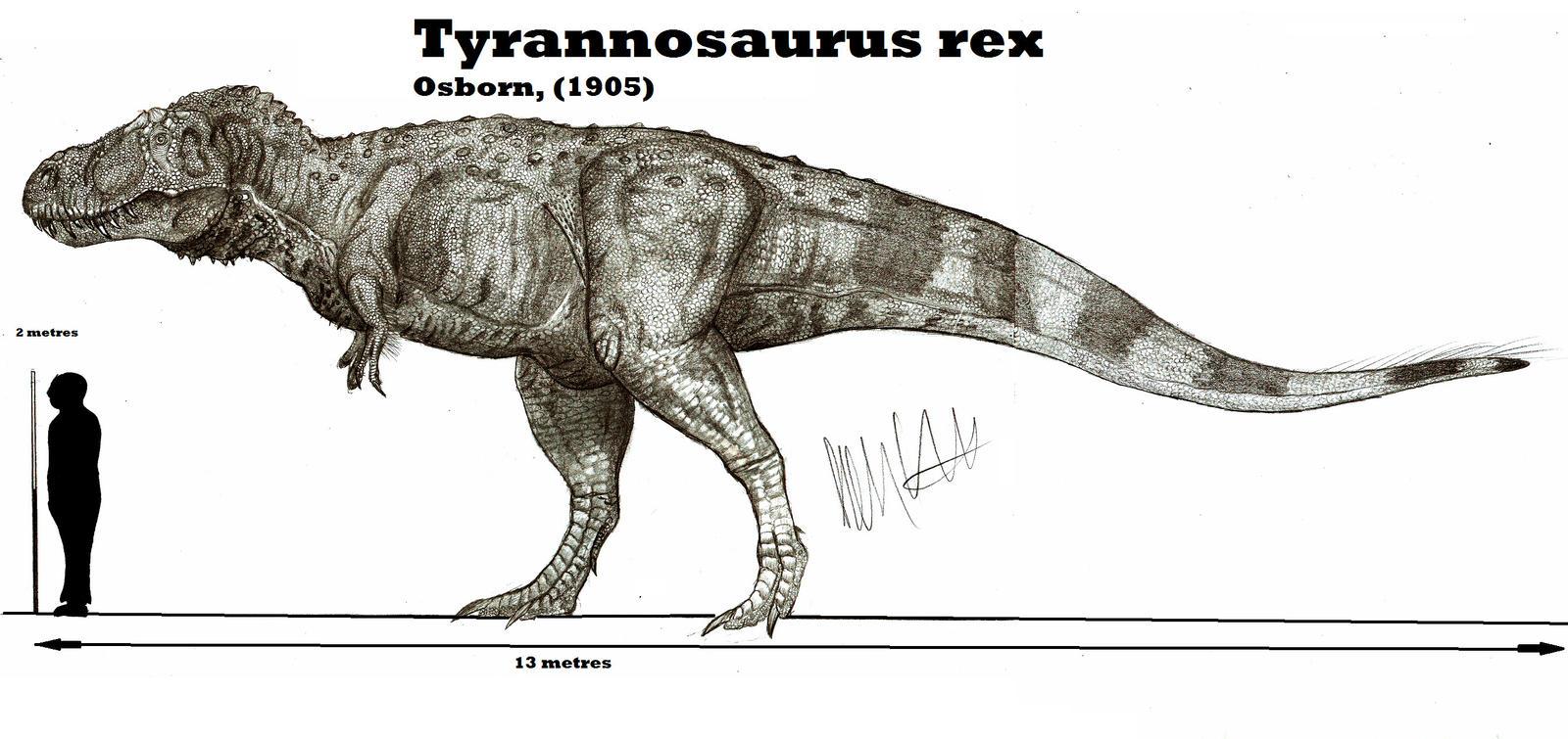 Tyrannosaurus rex by teratophoneus on deviantart for Tyranosaurus rex