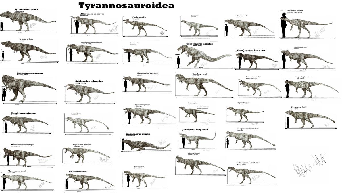 Tyrannosauroidea by Teratophoneus
