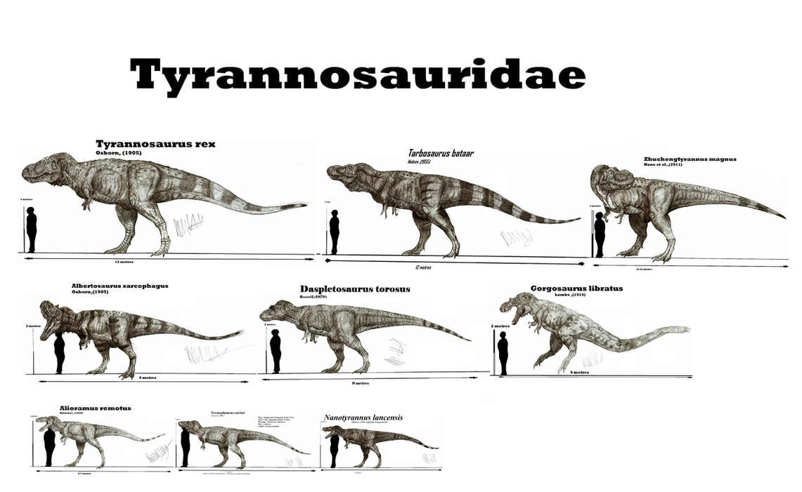 Tyrannosauridae by teratophoneus on deviantart for T rex family