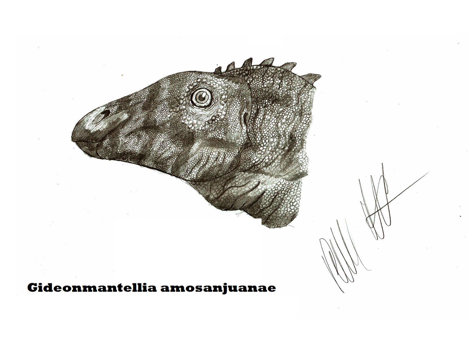 Gideonmantellia amosanjuanae