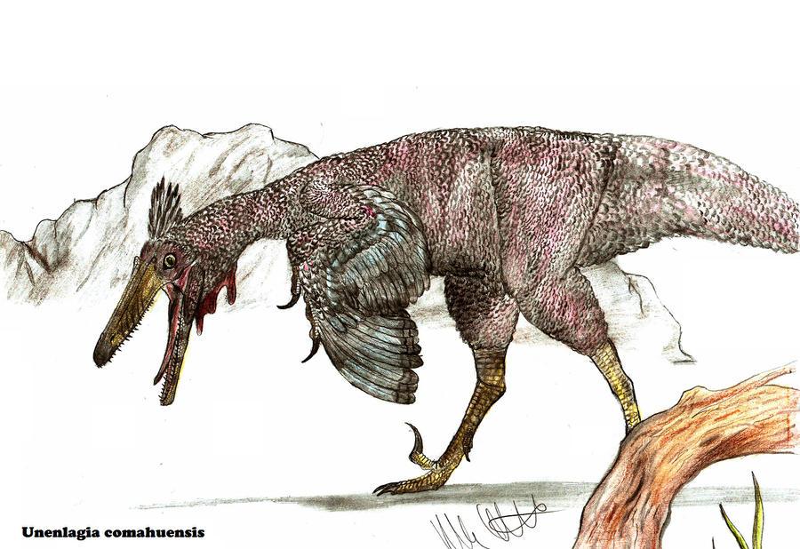 Unenlagia comahuensis by Teratophoneus