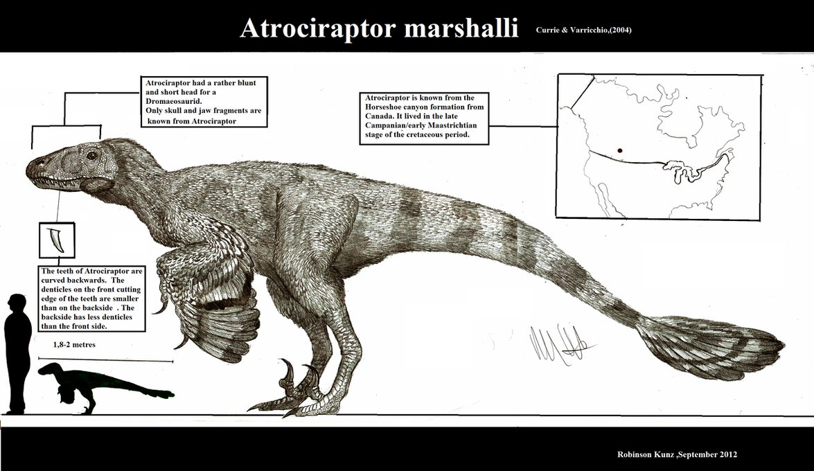 Atrociraptor marshalli by Teratophoneus