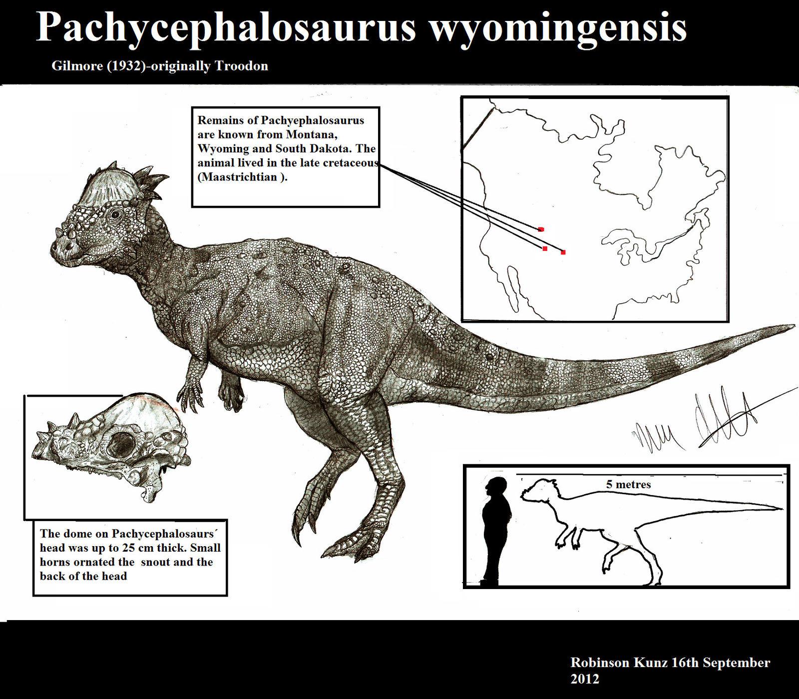 Pachycephalosaurus wyomingensis by Teratophoneus