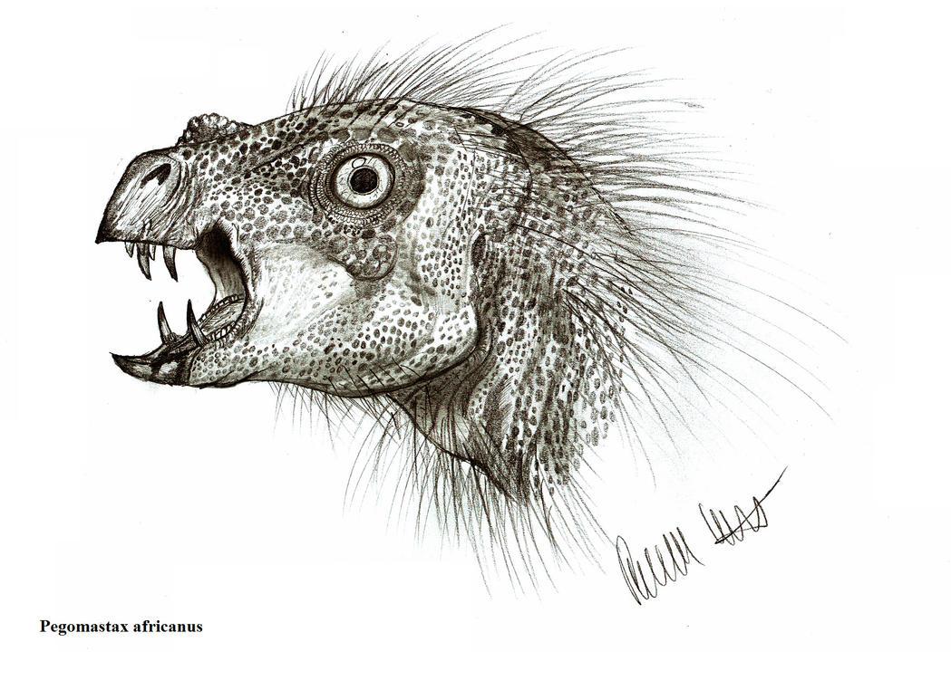 Pegomastax africanus by Teratophoneus